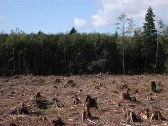 Tala de árboles produce 20% de gases de efecto invernadero, según Greenpeace
