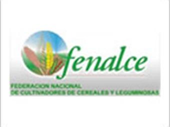 Masiva producción de maíz y nadie quiere comprar la cosecha: Fenalce