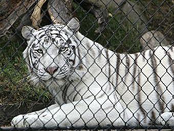 El maltrato de animales en los circos de Colombia, está llegando a niveles alarmantes