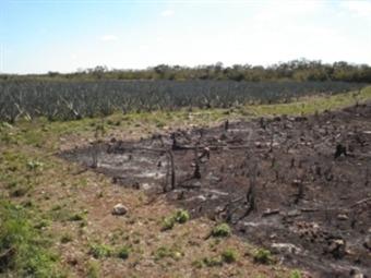Quemas agrícolas están prohibidas en Colombia: ICA
