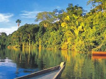 Nasa revela graves daños en vegetación del Amazonas
