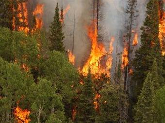 Alertan Quema de Maquinaria y Bosques