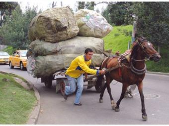Importante campaña de adopción de caballos en proceso de sustitución de vehículos de tracción animal