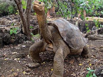Muere en Galápagos el 'Solitario Jorge', última tortuga de su especie