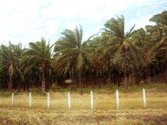 Consejo de la Judicatura: Precios de tierras entregadas por exparamilitares están inflados