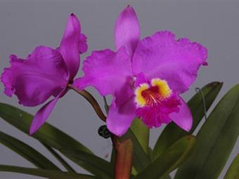 Se abrió Orquídeas, Pájaros y Flores en el Jardín Botánico de Medellín