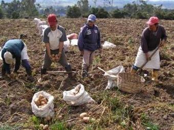 Campesinos en Boyacá regresan a sus labores luego de levantar el paro papero