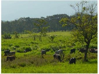 Colombiano desarrolla nueva aplicación móvil para ganaderos