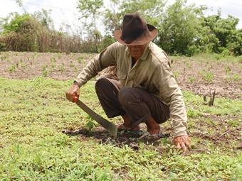 Finagro lanza salvavidas a campesinos morosos con la banca privada