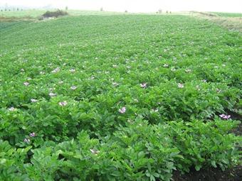 A partir de hoy el Gobierno adelantará compra directa de cosechas a campesinos