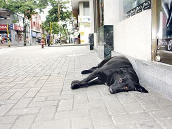 Este domingo jornada de adopción de animales callejeros en Pereira