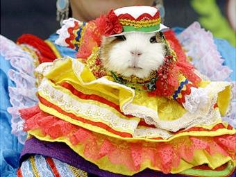 Con el festival del cuy se remata el Carnaval de negros y blancos