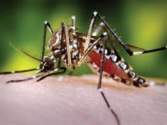 Alerta por casos de dengue en Bogotá