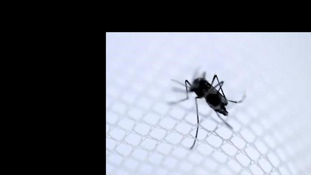 """""""Autoridades deben tomar medidas para evitar propagación del chikungunya"""""""