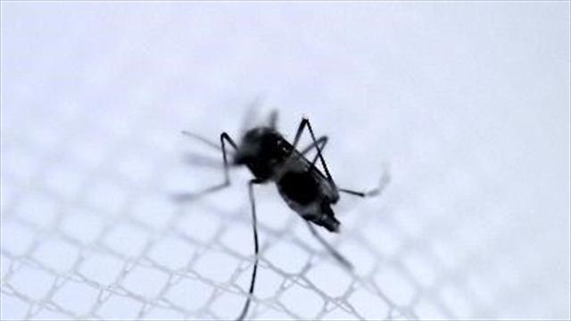 Podrían llegar a 700.000 los afectados por chikunguña: Santos