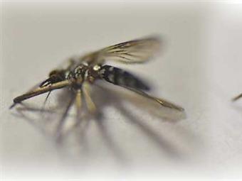 Alrededor de 3.000 casos de Chikungunya se presentan en Cartagena: DADIS