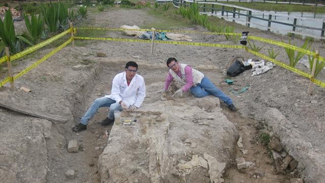 Hallan nuevo fósil en Villa de Leyva
