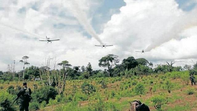 En labores de erradicación de cultivos ilícitos han muerto 200 colombianos