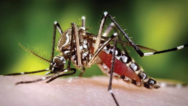 El Chikungunya ha causado 35 muertes en el país