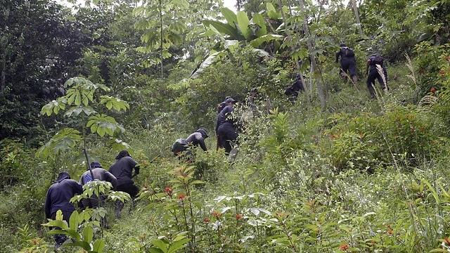 En 52 por ciento aumentó producción de cocaína en Colombia en 2014
