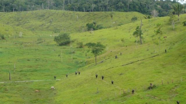 Gobierno recupera tierras en poder de las Farc equivalentes al Quindío