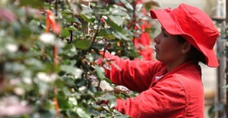 Utilidades de empresas de flores en Colombia presentaron fuerte repunte