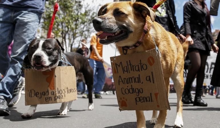 Corte Constitucional revivirá debate sobre derechos de los animales: Corte Constitucional revivirá debate sobre derechos de los animales