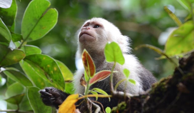 Santos pedirá ayuda en COP21 para preservar biodiversidad