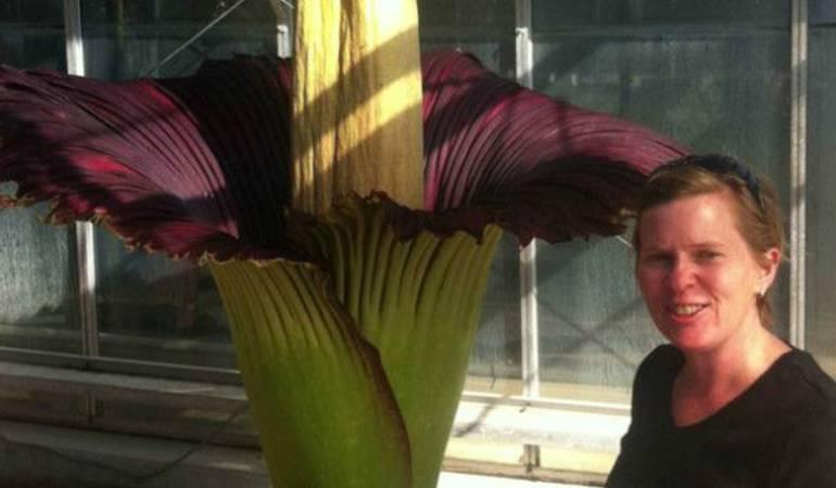 La rara y enorme flor que huele a muerto y que muchos hacen fila para ver