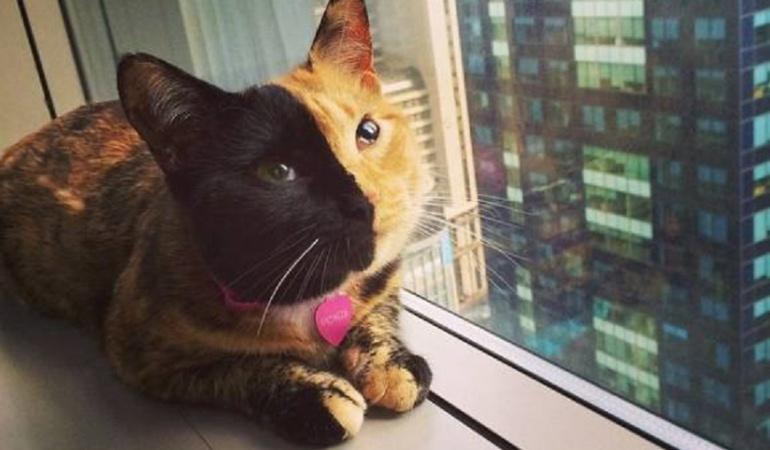 Día Internacional del Gato: Día Internacional del Gato
