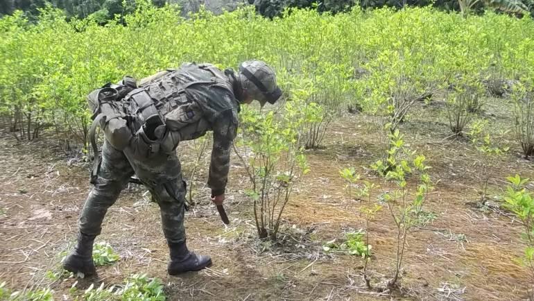 ONU dice problema en Colombia es acabar el narcotráfico no cultivos de coca