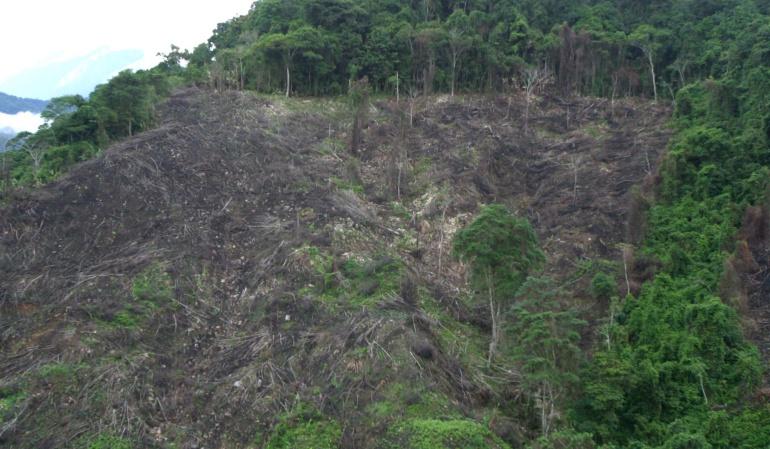 Deforestación en Colombia: Cada año en el país se deforesta un área del tamaño de Bogotá