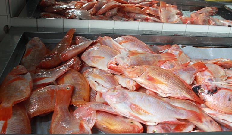 pescado en oferta el jueves y viernes santo: Oferta de pescado está garantizada para el jueves y viernes santos
