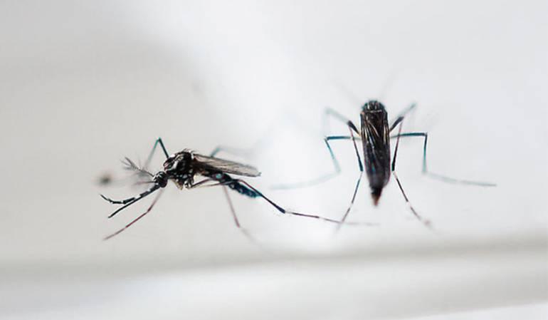 Se detecta en Perú primer caso autóctono de zika, transmitido por vía sexual
