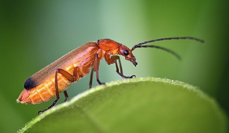 atletas insectos: Por qué hay atletas que comen insectos para mejorar su rendimiento