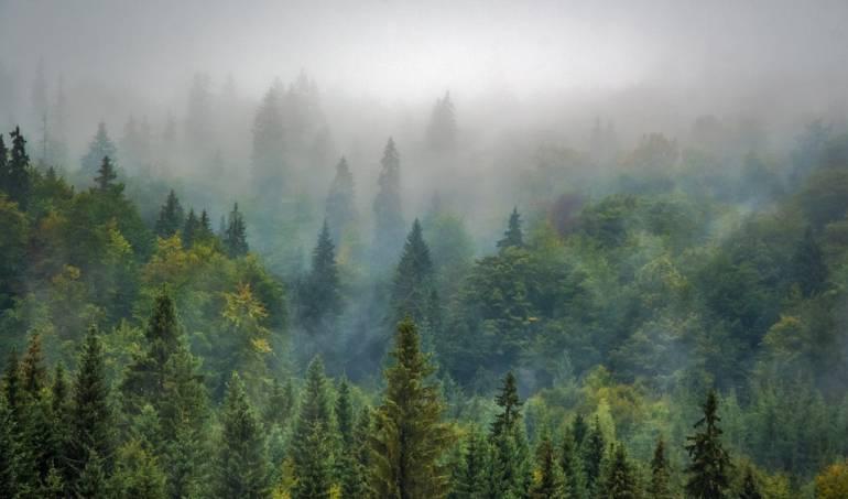 Niño castigado se perdió en bosque de Japón: Sin pistas sobre el niño nipón abandonado por padres en bosque como castigo