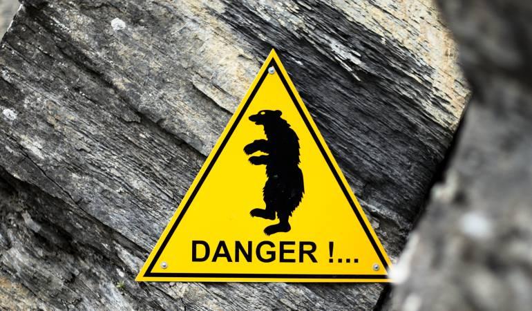 Alerta en Japón por ataques de osos: Oleada de ataques mortales de osos causa alarma en el norte de Japón