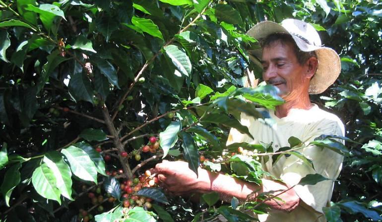 Exportaciones de café caen 7%