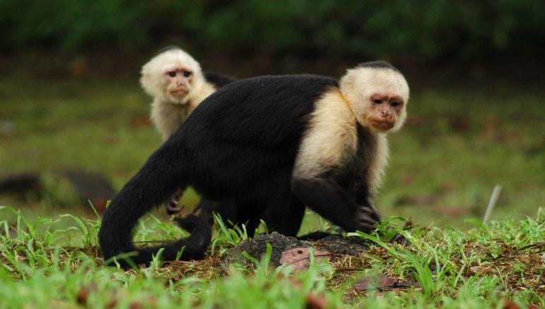 Ponencia busca que animales sean considerados como seres sintientes