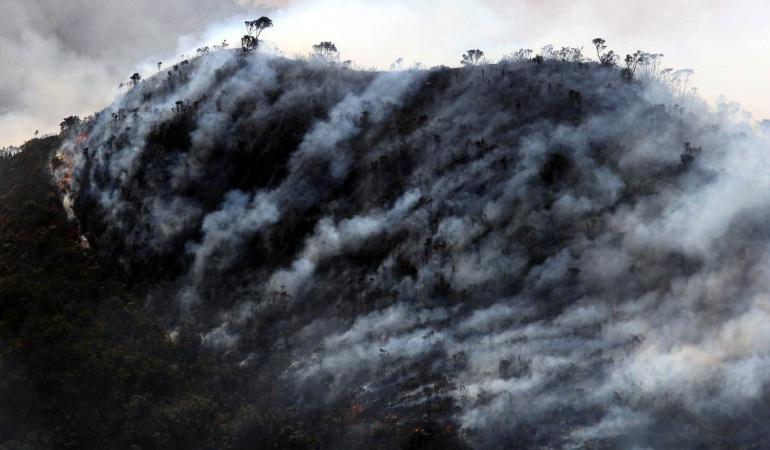 Daño a los bosques en Colombia: Colombia ha perdido 2,4 millones de hectáreas de bosques