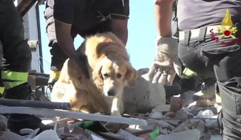 Perro sobreviviente terremoto en Italia: Romeo, el perro que sobrevivió nueve días bajo los escombros del terremoto en Italia