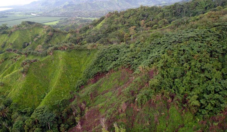 Colombia perdió 124.035 hectáreas de bosques en 2015