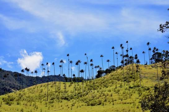 Los 10 lugares de Colombia mejor calificados en TripAdvisor