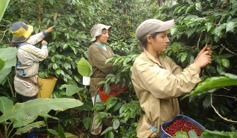 Producción de café fue positiva en octubre