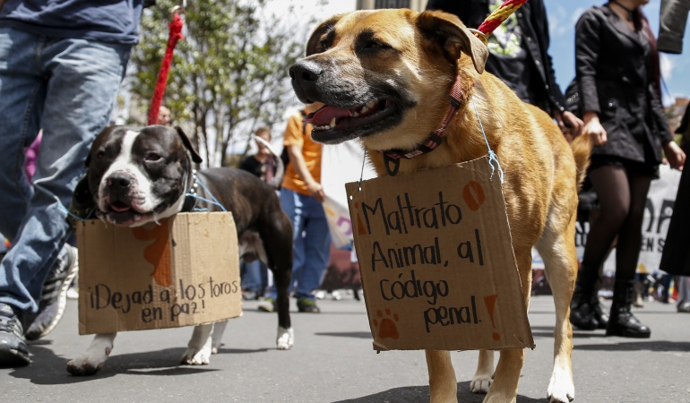 Maltrato animal: Corte Constitucional estudiará demandas contra el maltrato animal