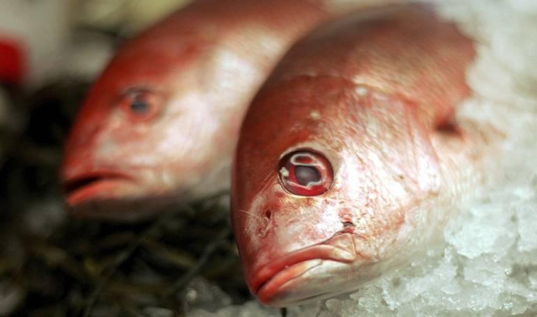 Aumento de las temperaturas en el planeta: ¿Por qué comer pescado puede ser menos saludable con el aumento de las temperaturas en el planeta?