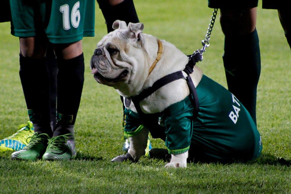 La mascota de equipo se robo la atención en la previa del juego.