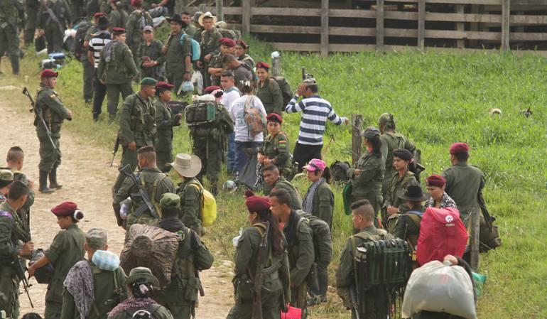 Farc, zonas veredales.: Se reduce a 500 el número de guerrilleros de las Farc que debe ingresar a las Zonas Veredales