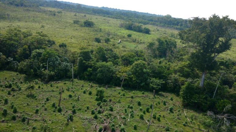 El fiscal General de la Nación Néstor Humberto Martínez informó que la entidad identificó una serie de terrenos baldíos en Caquetá, que presuntamente serían usados por las FARC, para la explotación de cultivos ilícitos.