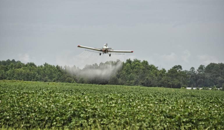 Cultivos ilícitos: Sin glifosato, el Gobierno ataca a la coca con cuatro alternativas